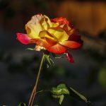 lolaruizfotos_web -07459 flores